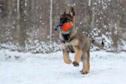 Картинки по запросу картинки снег и щенки